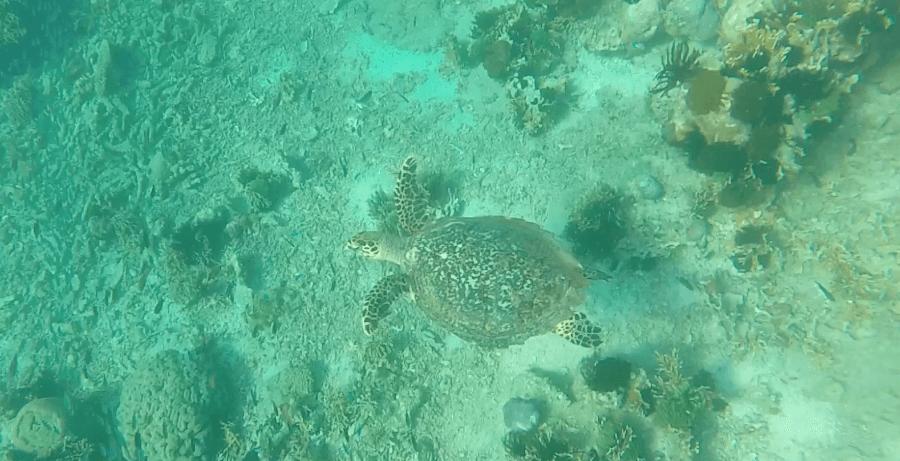 turtle sanctuary indonesia gili meno