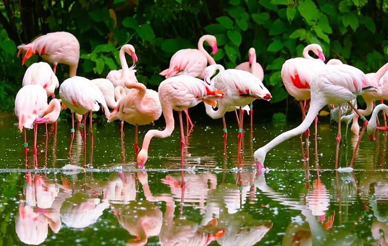 flamingos area curacao